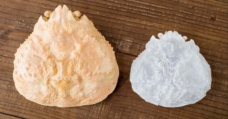除菌に伴う手荒れに。カニ殻の大学研究から生まれた保湿ハンドジェル「シェルバリア」